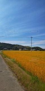 小麦畑の写真・画像素材[2151657]