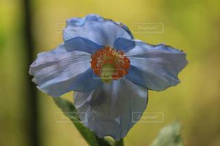 花のクローズアップの写真・画像素材[2121560]