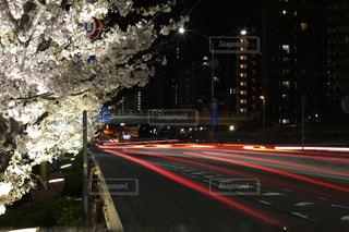 夜桜と道の写真・画像素材[1091266]