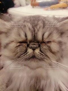 猫の写真・画像素材[84451]