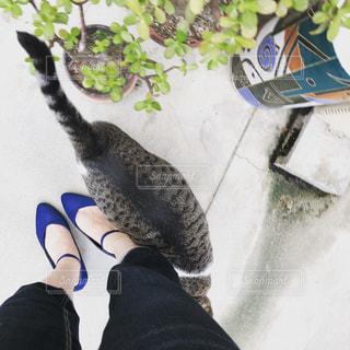 猫と散歩の写真・画像素材[2100417]