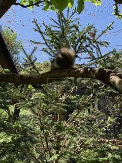 木の枝にとまったリスのお尻の写真・画像素材[2100639]
