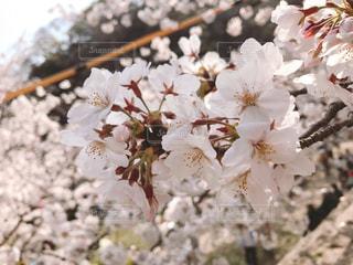 花のクローズアップの写真・画像素材[2100894]