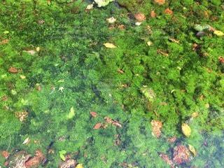自然の写真・画像素材[79959]