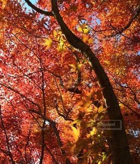 森林 - No.79915