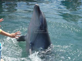 イルカとふれあいの写真・画像素材[2101531]