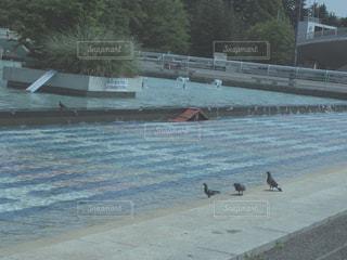 公園の噴水池にいる鳩の写真・画像素材[2104045]