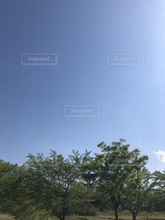 高い木の写真・画像素材[2102047]