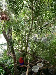 木の上に座っているオウムの写真・画像素材[2102506]