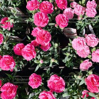 植物の上のピンクの花の写真・画像素材[2103448]
