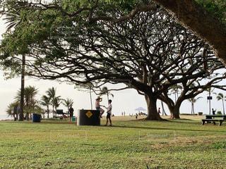 草原の大きな木の写真・画像素材[2120323]