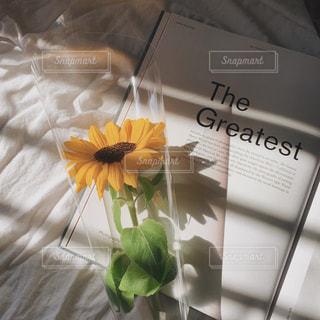 花のクローズアップの写真・画像素材[2321845]
