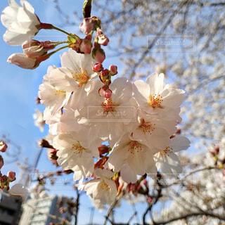 花のクローズアップの写真・画像素材[4284083]