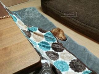 木製のテーブルの上に横たわっている犬の写真・画像素材[2129662]