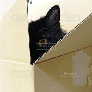 箱に入った黒猫の写真・画像素材[2104232]