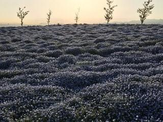 草の畑の写真・画像素材[2104506]