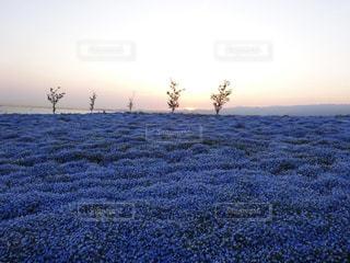 草原に沈む夕日の写真・画像素材[2104507]