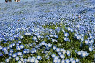 花畑のクローズアップの写真・画像素材[2104508]