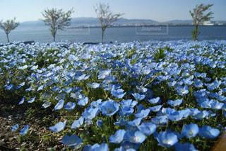 花のクローズアップの写真・画像素材[2104512]