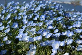 花のクローズアップの写真・画像素材[2104513]