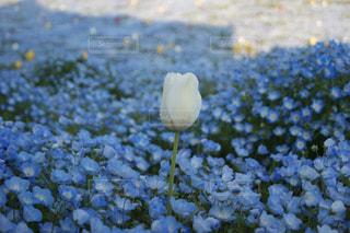 花のクローズアップの写真・画像素材[2118333]