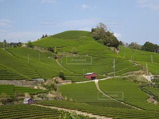 茶畑の写真・画像素材[2118337]
