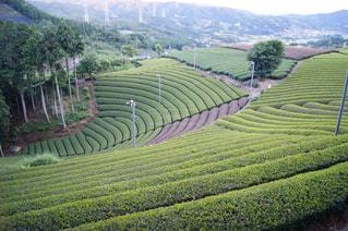 背景に Longsheng 米台地のある大きな緑の野原の写真・画像素材[2121736]