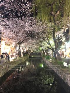 夜桜 見物の写真・画像素材[2121786]