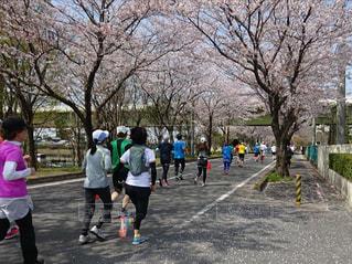 桜   満開の中  マラソン大会の写真・画像素材[2124268]