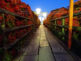 長岡天満宮  つつじ  ライトアップの写真・画像素材[2124419]