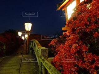 長岡天満宮  つつじライトアップの写真・画像素材[2124420]