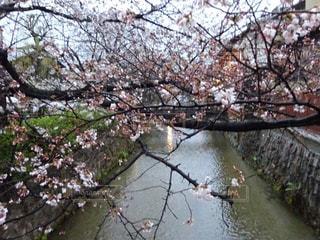 春の写真・画像素材[2147312]