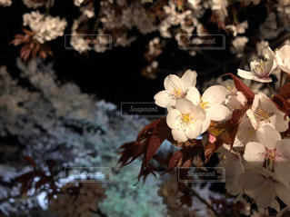 自然の写真・画像素材[2147317]