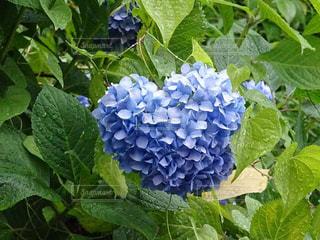 花の写真・画像素材[2151895]