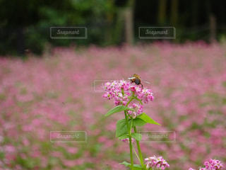 花の写真・画像素材[2151896]