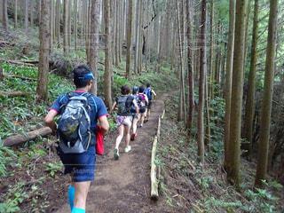 森の中の人々のグループの写真・画像素材[2214680]