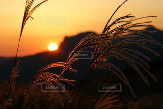 自然の写真・画像素材[2584814]