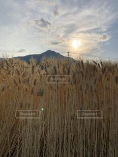 芝生に覆われた野原の上に立っている男の写真・画像素材[2105295]