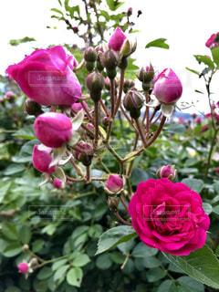 花のクローズアップの写真・画像素材[2117607]