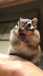 動物の写真・画像素材[2487634]