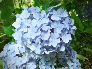 花のクローズアップの写真・画像素材[2142666]