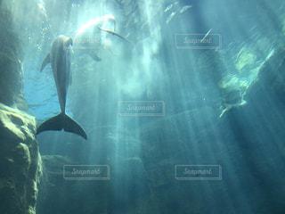 イルカの背中の写真・画像素材[2106836]