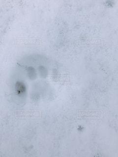 雪に覆われた斜面の接写の写真・画像素材[2105701]