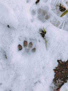 猫の足跡スタンプの写真・画像素材[2105702]