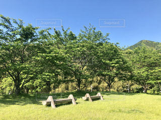 緑鮮やかな午後の初夏の写真・画像素材[2105787]