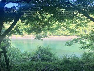 緑色の湖面の写真・画像素材[2105792]