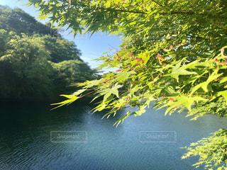紅葉と湖の写真・画像素材[2105794]