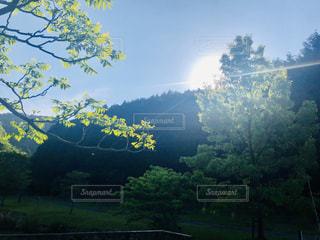 森林浴〜光と影の中で〜の写真・画像素材[2105796]