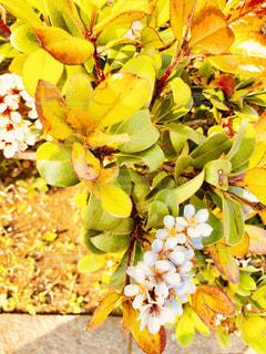 花のクローズアップの写真・画像素材[2115812]