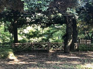 フェンスの隣の木の写真・画像素材[2211081]